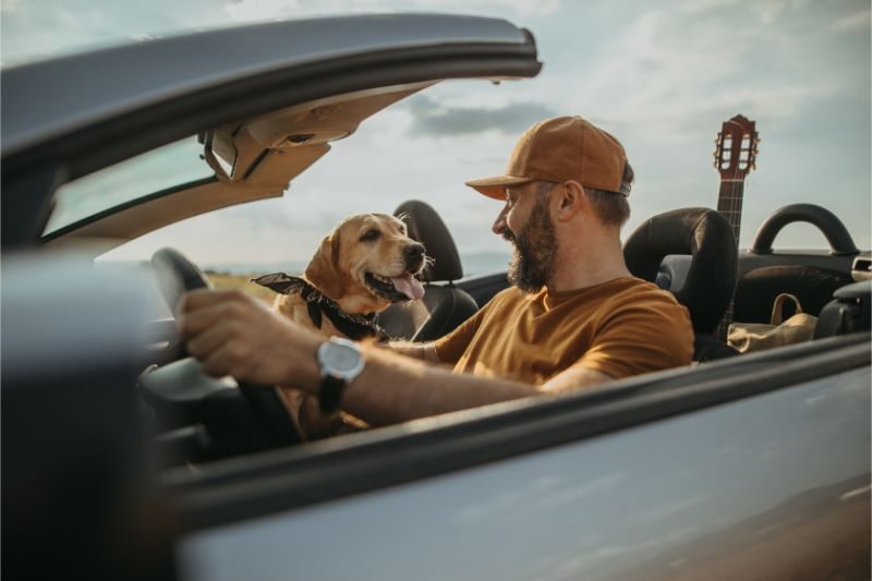 Pet travel: Dog in car with man