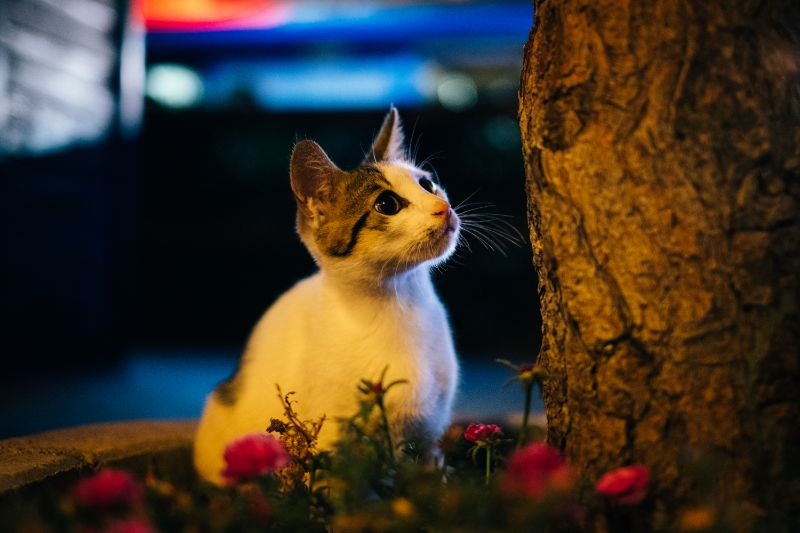 LA Cat Outside at Night